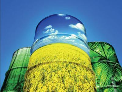 Report on Feasibility Study on Bio Diesel