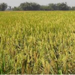 Project on A feasibility study on Desh Agro base Farm (Part 2)
