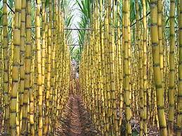 Assignment on Marketing Plan of Swift Sugarcane Juice.