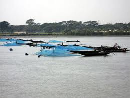 Assignment on Shrimp Culture in Bangladesh