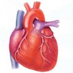 Assignment on Implementation of Heart Care System