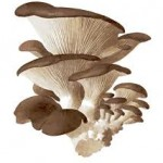 Internship Report on Prospects of Mushroom in Bangladesh