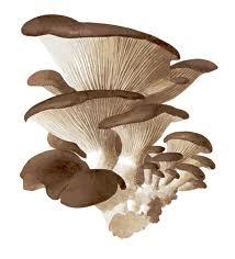 Internship Report on Prospects of Mushroom in Bangladesh