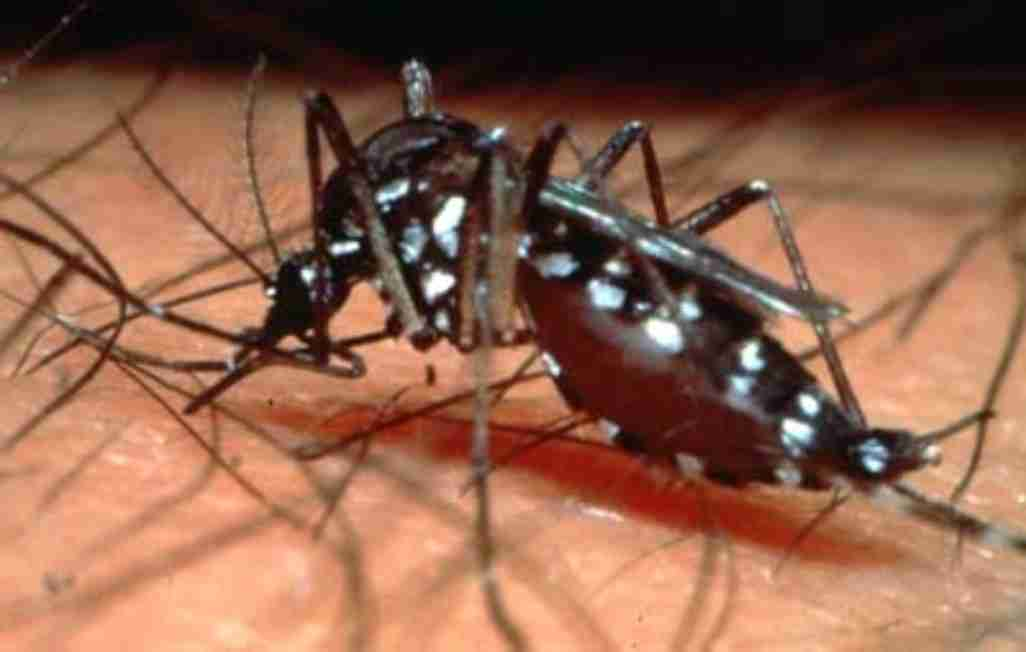 Assignment on Epidemiology- Dengue Fever