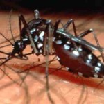 Report on Hemorrhagic Dengue Fever