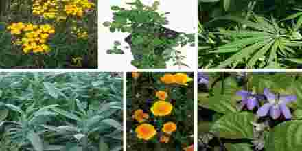 Detection of Seed Born Fungi of Some Selected Medicinal Plants