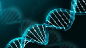 Assignment on DNA