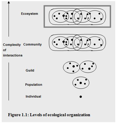 ecological-organization