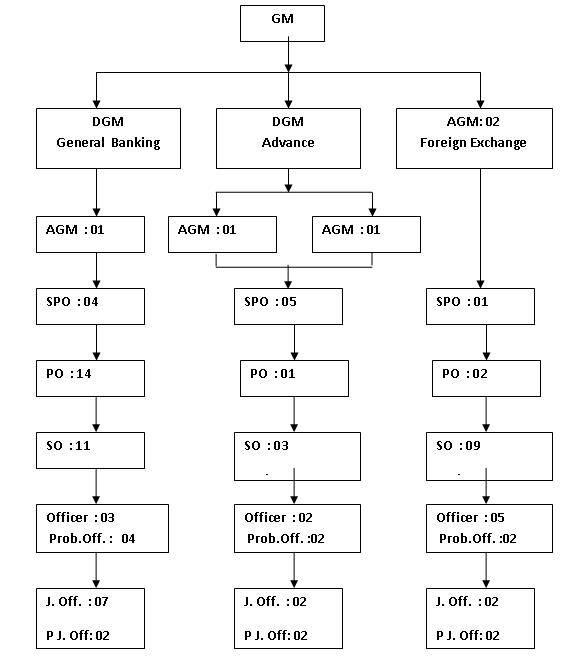 organogram of pubali bank