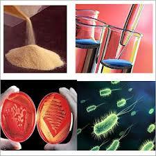 Bacteriological Media