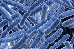Report on Microbial Communities