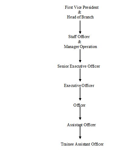 The hierarchy of the Branch