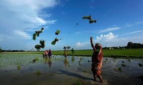 WORLD TRADE IN AGRICULTURE BANGLADESH