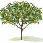 Assignment on Fruit tree Species Growth Rate