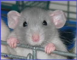 Assignment on Campaign and Report on Rat Damages