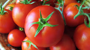 Report on Performances of Tomato in Association with Different Tree Species