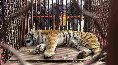 Are our zoos cruel to Wild Animals?