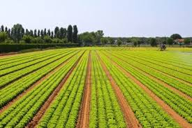 Agriculture Sector of Bangladesh
