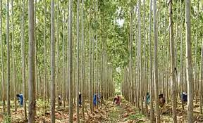 Social forestry in Bangladesh