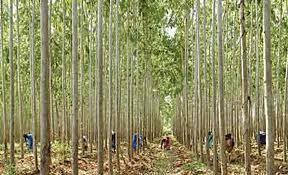 Social forestry in Bangladesh