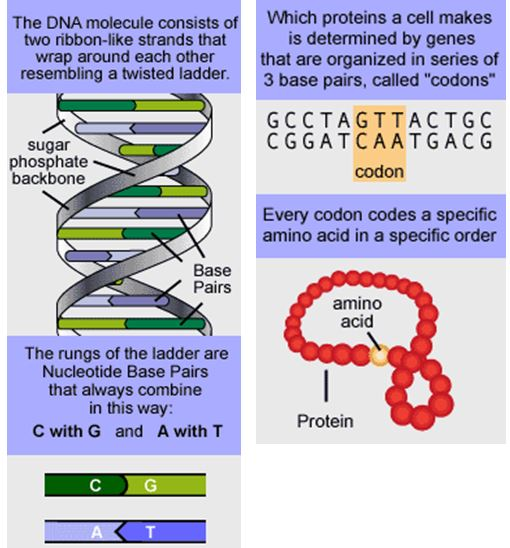 Building Block Of Heredity