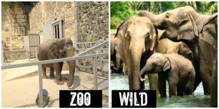 Are our Zoo Cruel to Wild Animals?
