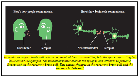 Brain's Chemical Recyclers