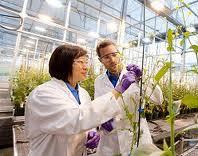 Bayer Crop Science Ltd Bangladesh