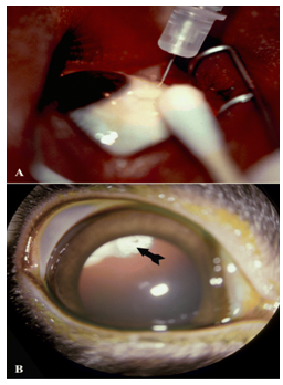 External photograph of the eye showing injection