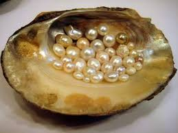 Commercial Value of Freshwater of Freshwater Pearl Culture