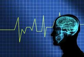 Meditation and Brain Function