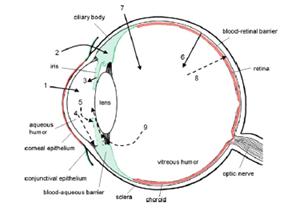 schematic presentation