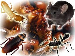 Vertebrate and Invertebrate Pests