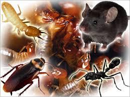 Vertebrate and Invertebrate Pests
