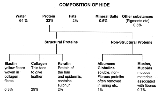 Histological Structure Of Cowhide Assignment Point