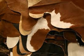 Histological Structure of Cowhide