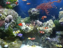 A Study on the Impact of Exotic Fish Culture in Bangladesh
