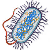 Isolation of Aerobic Enteric Bacteria Ankylosing Spondylitis