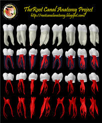 Status of Dental Caries in First Permanent Molars