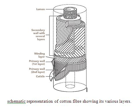 Conventional Alkali Scouring and BioScouring on Cotton Knitted Fabric