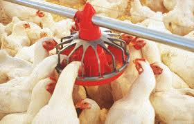 Marketing Practices of Commercially Available Poultry Feeds