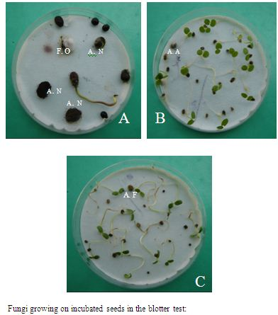 Detection of Seed Borne Fungi of Some Selected Medicinal Plants