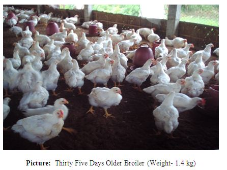 Report on Poultry Industry of Bangladesh