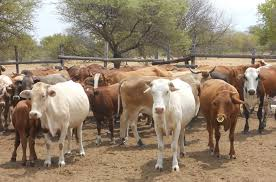 The Role of Dairy Farm in livestock Sector of Bangladesh