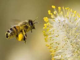 The Main Components of Bee Pollen