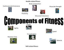 Article on What Is Fitness and the Components of Fitness