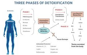 How Detoxification Helps for Overall Health