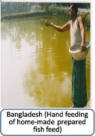 Marketing Practices of Fish Feeds in Bangladesh