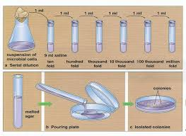 Describe Microbial Cultivation