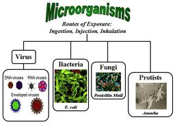 Growth Requirements for Microorganisms